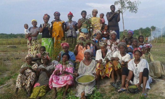 moringa-guineabissau-africa